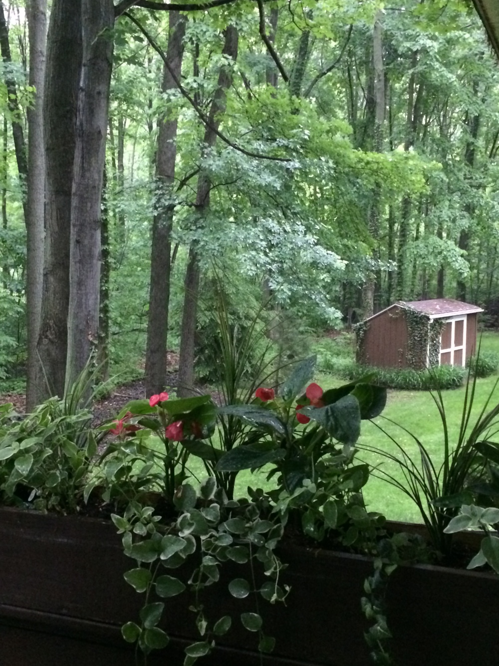 a lovebird's childhood home